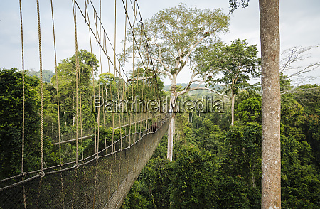 tourists on canopy walkway through tropical