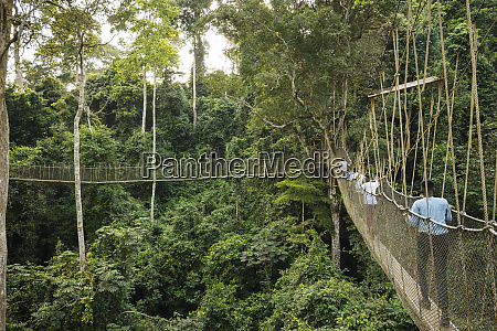 canopy walkway through tropical rainforest in