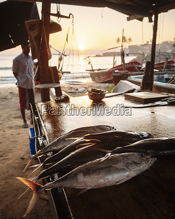 fish market at dawn galle south