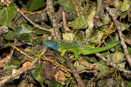 a colorful lizard in natur
