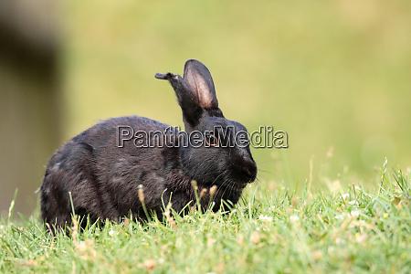 wild rabbits