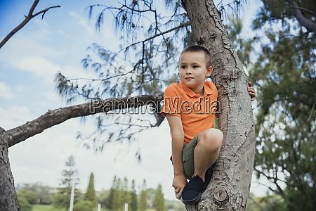young boy climbing a tree