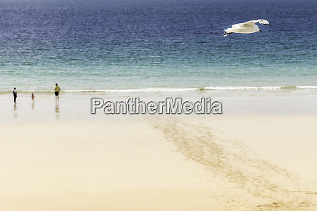 seagull flies over the beach