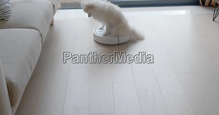 pomeranian dog sit on robotic vacuum