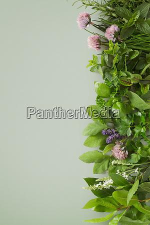 fresh healthy culinary herb assortment