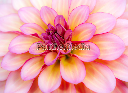 abstact natural flower background with a