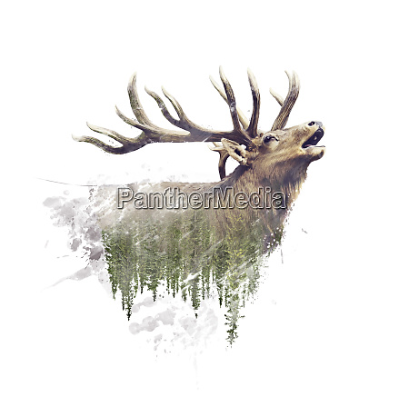 deer and forest watercolor double exposure