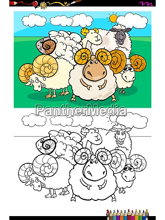 sheep animal characters group color book