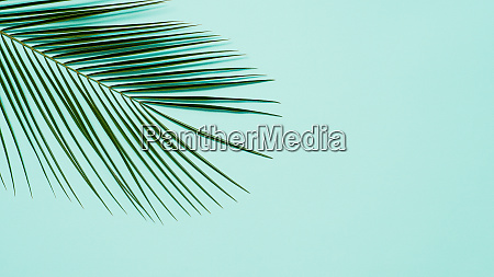 palm leaves on pastel blue background