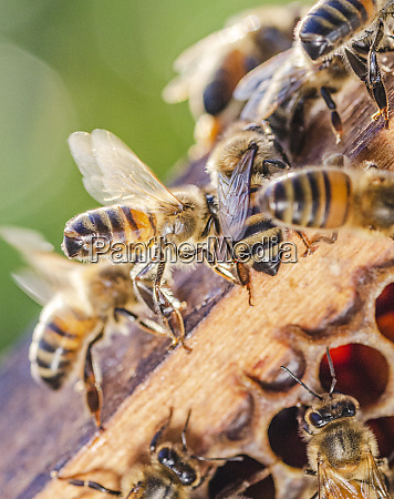 honey bees on honeycomb in apiary