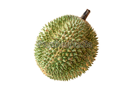 malaysia famous fruits durian black thorn