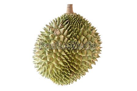malaysia famous fruits durian musang king
