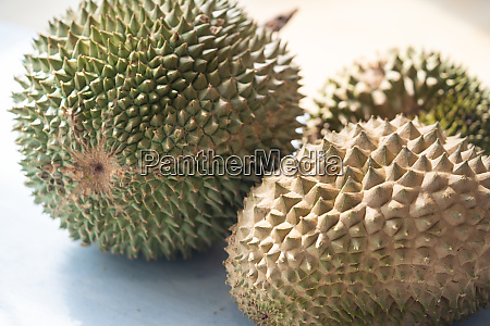 malaysia famous fruits blackthorn durian