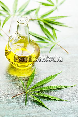 marijuana cannabis leaves and oil