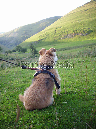 dog looking at hill