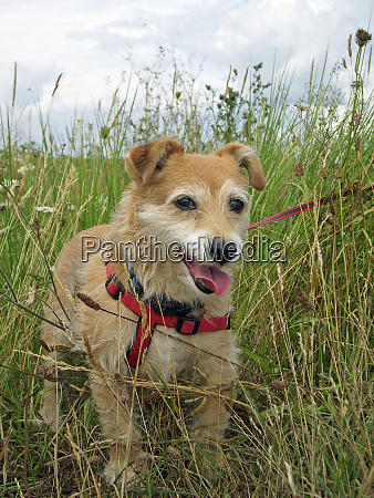 cute dog in long grass