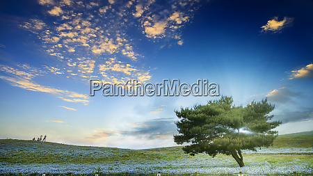 hitachi seaside park is the most