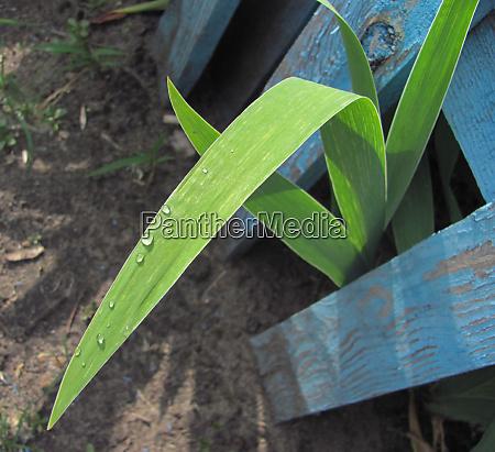 raindrops on green leaf