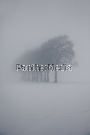 hazy winter landscape with row of