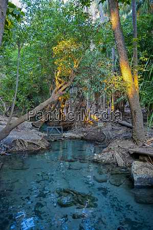 mataranka thermal pool in the outback