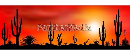mexican desert sunset cacti