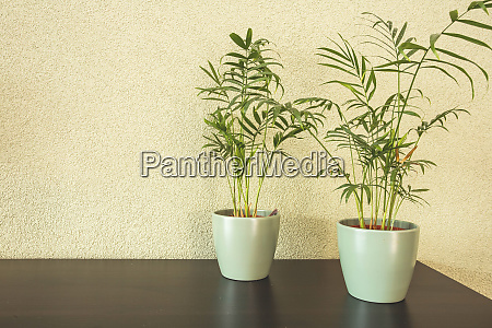 home plants with green leaves in