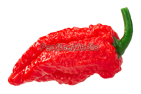 fatalii pepper c chinense paths