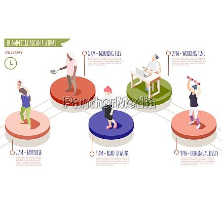 human circadian rhythms isometric infographics with