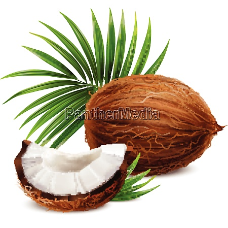 coconut fresh whole and segment with