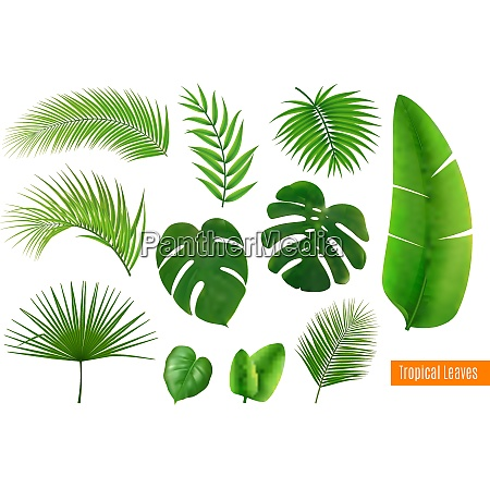 green tropical leaves of different shape
