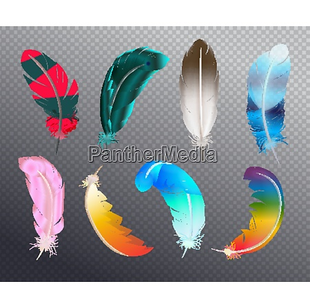 colorful realistic set of bird feathers