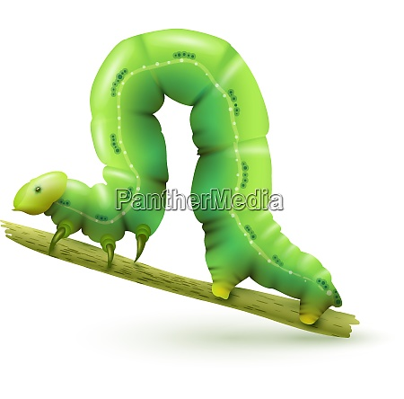 green caterpillar insect realistic on plant