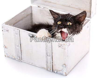 a playful kitty hides in a