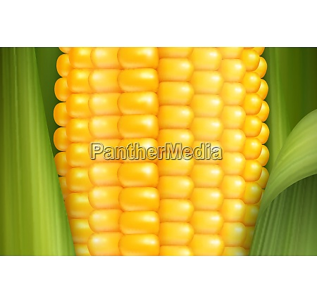 corn cob close up with glossy