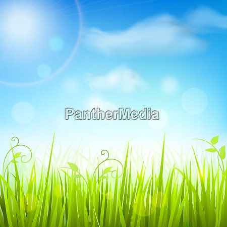 fresh green spring meadow grass under