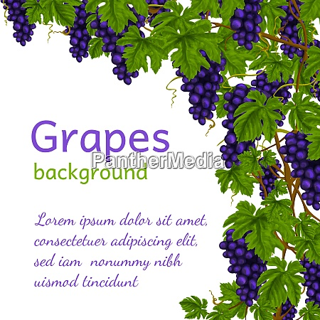 wine grapes clusters with leaves decoration