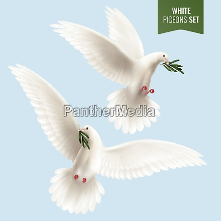 white dove set with peace and