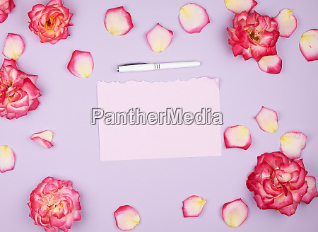 empty pink paper sheet and buds