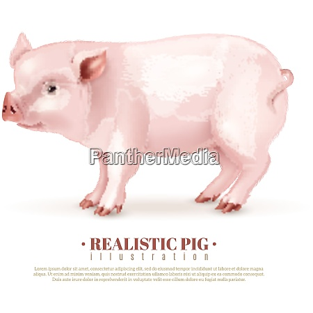 realistic pink piggy side view isolated