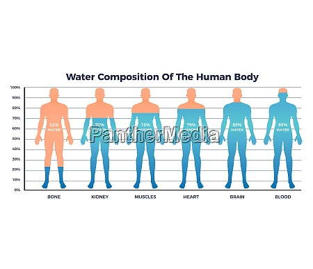 body and water chart with water