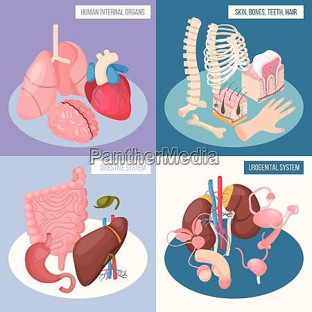 human organs 2x2 design concept set