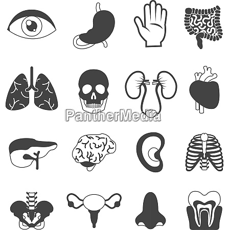 human organs black and white set