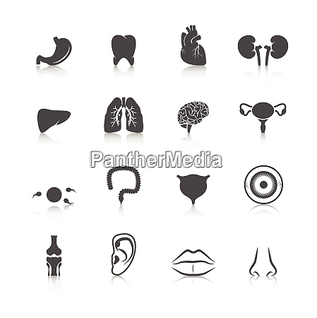 human organs black icons set of