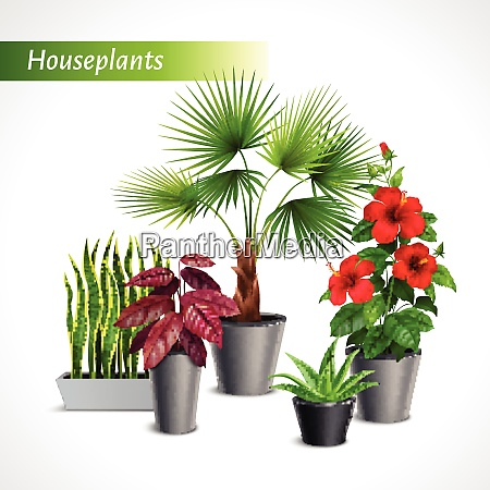 colored houseplants realistic composition with green