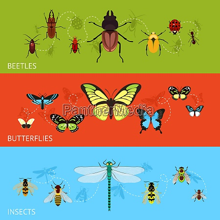 insects colored decorative banner flat set