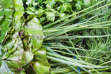 various wet fresh greenery close up