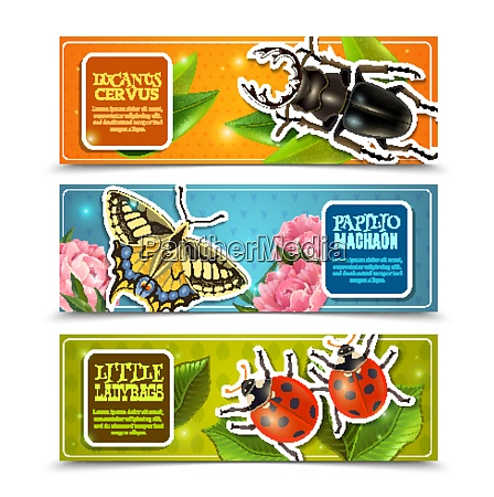 insects horizontal banners set with ladybugs