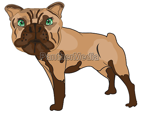 vector illustration pets dogs of the