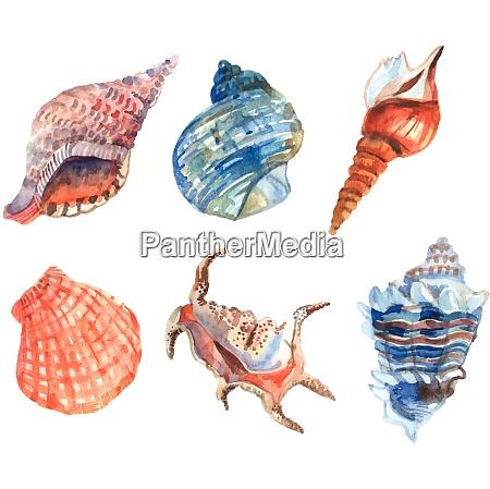 watercolor shell starfish cockleshells decorative icons