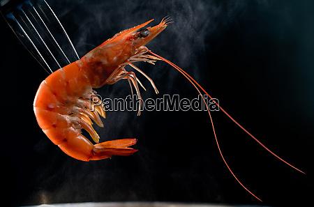 steamed shrimp on fork isolated on
